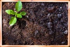 Marco de Mini Garden fotografía de archivo libre de regalías