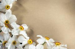 Marco de Narcis fotografía de archivo libre de regalías