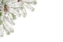 Marco de ramificaciones del piel-árbol Fotos de archivo