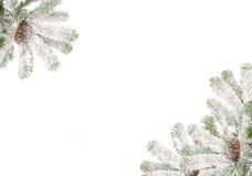 Marco de ramificaciones del piel-árbol Foto de archivo libre de regalías