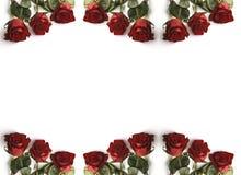 Marco de Rose Imagen de archivo libre de regalías