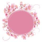 Marco de Sakura Imágenes de archivo libres de regalías