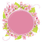 Marco de Sakura Imagenes de archivo