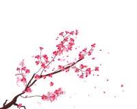 Marco de Sakura de la acuarela Fondo con las ramas del cerezo del flor El japonés dibujado mano florece el fondo stock de ilustración
