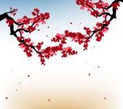 Marco de Sakura de la acuarela Fondo con las ramas del cerezo del flor El japonés dibujado mano florece el fondo
