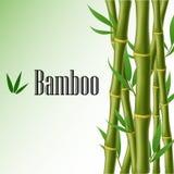 Marco de texto de bambú ilustración del vector