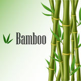 Marco de texto de bambú Fotografía de archivo