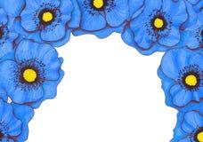 Marco decorativo de la flor Imagenes de archivo