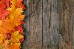 Marco decorativo del fondo de las hojas de arce de la caída Fotos de archivo