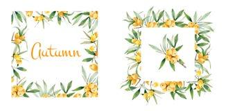 Marco decorativo del otoño de ramas y de bayas del espino cerval Stock de ilustración