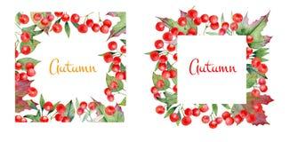 Marco decorativo del otoño de ramas y de bayas del viburnum Stock de ilustración