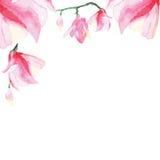 Marco decorativo floral Fotos de archivo