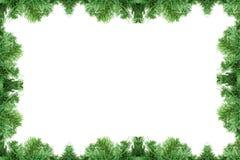 Marco del árbol de pino Imagen de archivo libre de regalías