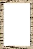 Marco del abedul Imagen de archivo libre de regalías
