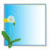 Marco del azul de la flor del Blowball del Taraxacum del diente de león Imagen de archivo libre de regalías