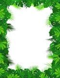 Marco del bosque de la naturaleza Imagen de archivo libre de regalías