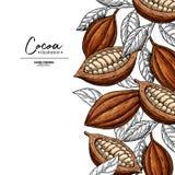 Marco del cacao Plantilla del dibujo del superfood del vector Grabado de la fruta, de la hoja y de la haba Bosquejo sano orgánico fotografía de archivo