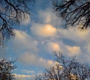 Marco del cielo con las ramas Foto de archivo libre de regalías