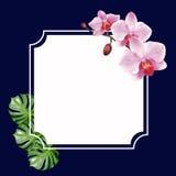 Marco del diseño del vector Imagen de archivo