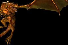 Marco del dragón Fotografía de archivo