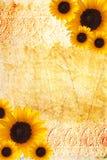 Marco del girasol Foto de archivo libre de regalías