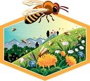 Marco del hexágono con las abejas de trabajador en las flores Imágenes de archivo libres de regalías