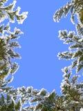 Marco del invierno Fotografía de archivo