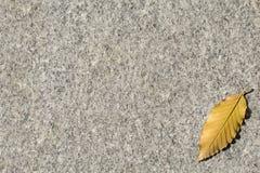 Marco del otoño con la hoja Foto de archivo libre de regalías