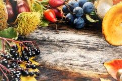 Marco del otoño con las bayas y las setas salvajes en viejo backg de madera Imágenes de archivo libres de regalías