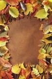 Marco del otoño Fotografía de archivo libre de regalías