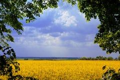 Marco del paisaje Foto de archivo