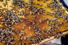 Marco del panal con las abejas Verano en un apiary_ Imagen de archivo libre de regalías