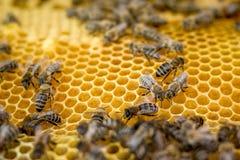 Marco del panal con las abejas Verano en un apiary_ Fotos de archivo libres de regalías