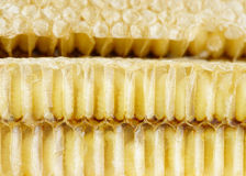 Marco del panal de abejas Fotos de archivo libres de regalías