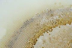 Marco del panal de abejas Imagen de archivo