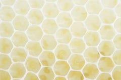 Marco del panal de abejas Fotografía de archivo