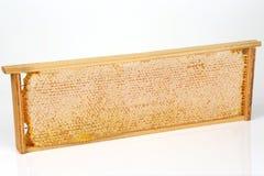 Marco del panal en un fondo blanco Imagen de archivo