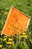 Marco del panal en un prado de la primavera Foto de archivo libre de regalías