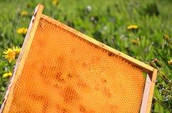 Marco del panal en un prado de la primavera Imagenes de archivo