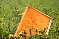 Marco del panal en un prado de la primavera Fotos de archivo