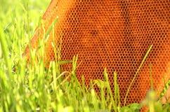Marco del panal en un prado de la primavera Imágenes de archivo libres de regalías