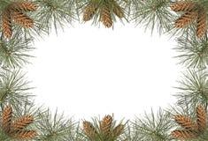 Marco del pino Imagen de archivo libre de regalías