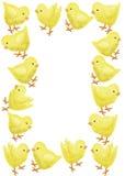 Marco del pollo Imagenes de archivo