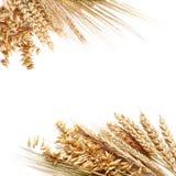 Marco del trigo Imagen de archivo libre de regalías