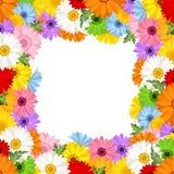 Marco del vector con las flores coloridas del gerbera Foto de archivo libre de regalías