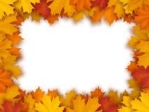 Marco del vector de hojas de arce caidas Fotografía de archivo libre de regalías