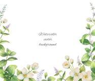 Marco del vector de la acuarela de flores y del jazmín de las ramas aislado en un fondo blanco Foto de archivo libre de regalías