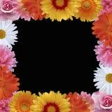 Marco del vector de la flor del verano Fotos de archivo libres de regalías
