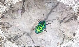 Marco del vintage con el fondo del escarabajo Imagenes de archivo