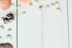 Marco del vintage con las cáscaras del mar en el fondo de madera de la sobremesa Fotografía de archivo